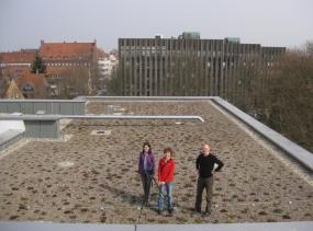Das leere Dach des Neubaus