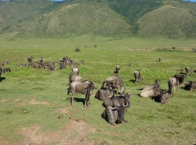 23 Gnus - Ngorongoro Tansania 2014 419