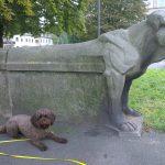 Schulhund-AG startet mit Fritzi