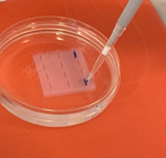 Biologie eA 13 auf Exkursion im Life Science Lab